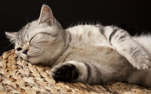 Обои Котенок сладко спит