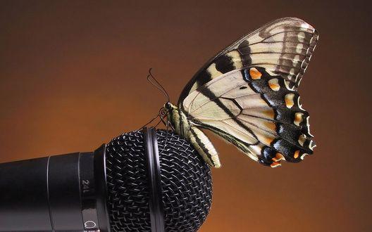 Обои Красивая бабочка уселась на микрофон