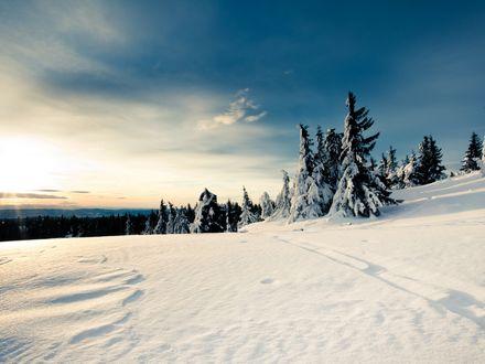 Обои Зимнее солнце над заснеженным ельником