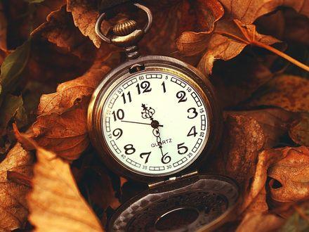 Обои Наручные часы на желтых листьях