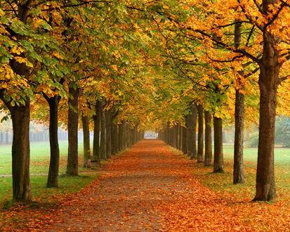 Обои Осенняя аллея в парке усыпанная листьями