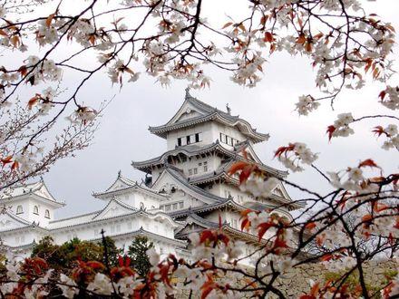 Обои Белый дом в китайском стиле и цветущая вишня