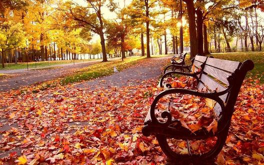 Обои Осень в парке, скмейка усыпана опавшими листьями