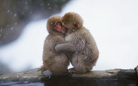 Обои Две обезьянки греются друг о друга
