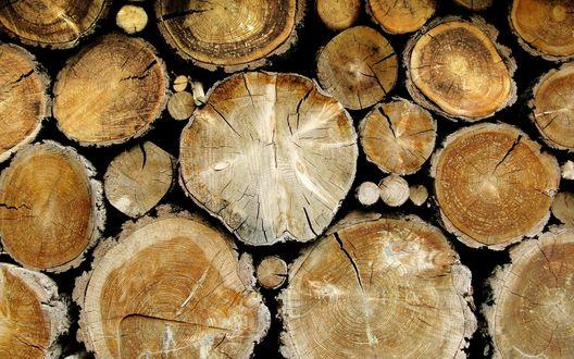 Обои Свежесрубленная древесина