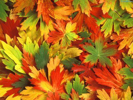 Обои Ковер осенних листьев
