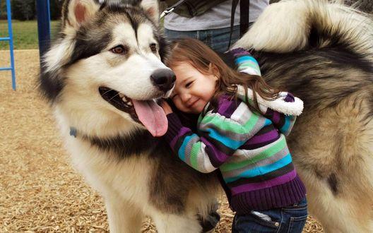 Обои Девочка обнимает лайку