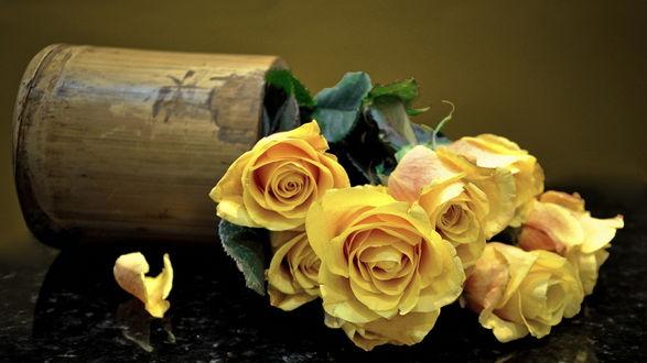 Обои Желтые розы в опрокинутой вазе из бамбука