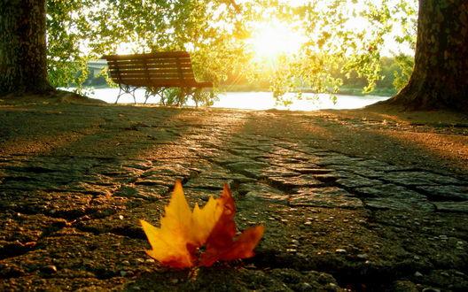 Обои Осенний лист одиноко лежит позади лавочки