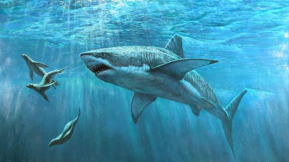 Обои Акула охотится на морских котиков под водой