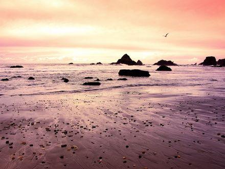 Обои Отлив на море, чайки носятся над побережьем, высматривая лёгкую добычу