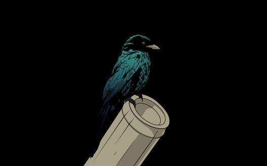 Обои Птица ворона зеленоватого оттенка сидит на трубе