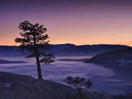 Обои Одинокая сосна на вершине горы, внизу расстилается туман, вдали виднеются леса и горы