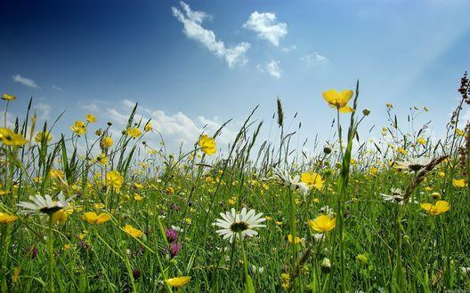 Обои Многообразие полевых цветов