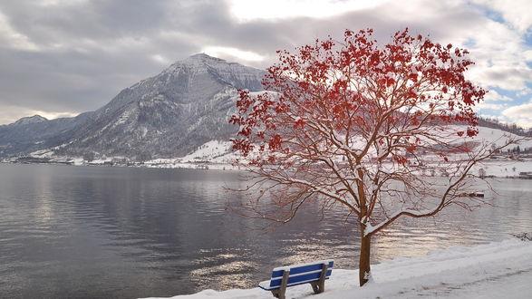 Обои Лавочка стоит у дерева с красными листьями перед озером