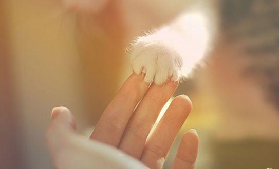 Обои Прикосновение кошачей мягкой лапки к женской руке