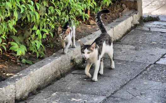 Обои Бездомная кошечка с маленьким котенком