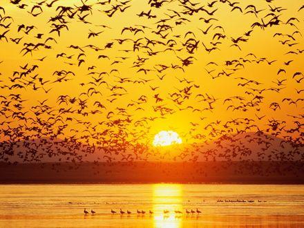 Обои Стая птиц кружит над водой на фоне заходящего солнца гор.