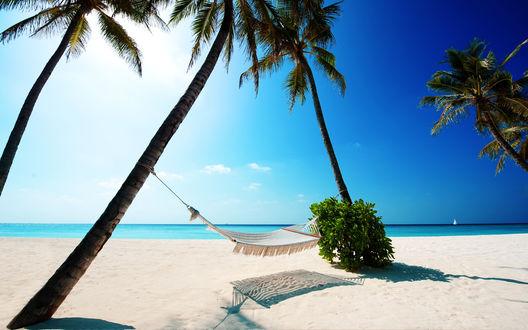 Обои Гамак, натянутый между пальмами на тропическом пляже