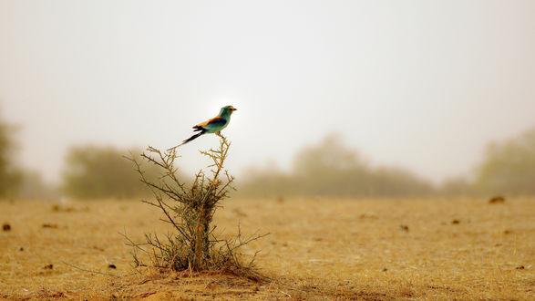 Обои Красивая птица сидит на сухом кусте
