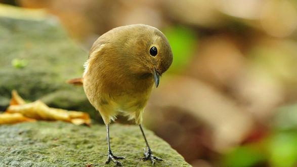 Обои Смешная птичка сидит на камне