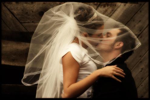 Обои Невеста накрыла жениха фатой и нежно его целует