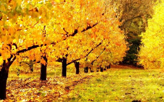 Обои Сказочная осень.
