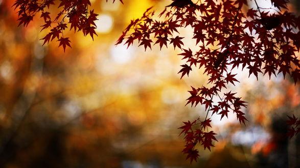 Обои Сквозь листья.