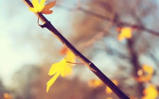 Обои Ветка и листья