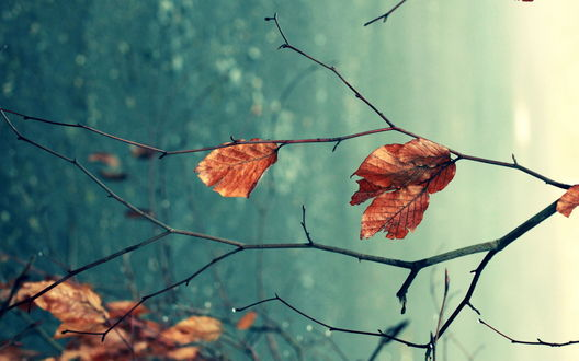 Обои Листья на голубом фоне.