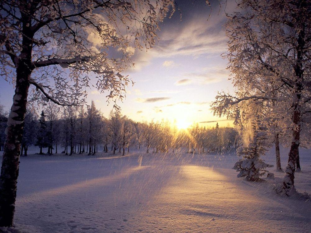 Зимний лес гифка