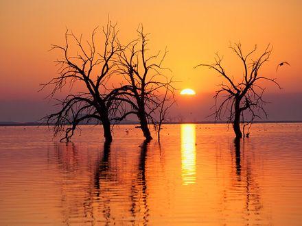 Обои Черные силуэты деревьев на затопленной территории на фоне заката