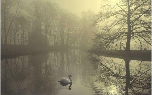 Обои Озеро в тумане, по которому одиноко плавает лебедь