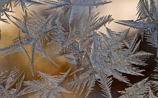 Обои Зимний узор на стекле