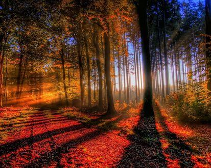 Обои Красивый восход солнца в осеннем лесу