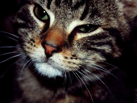 Обои Хитрая мордашка кота