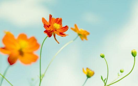 Обои Цветы тянутся к небу