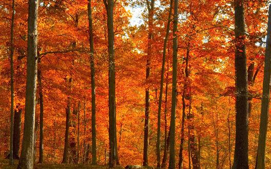 Обои Листопад в осеннем лесу