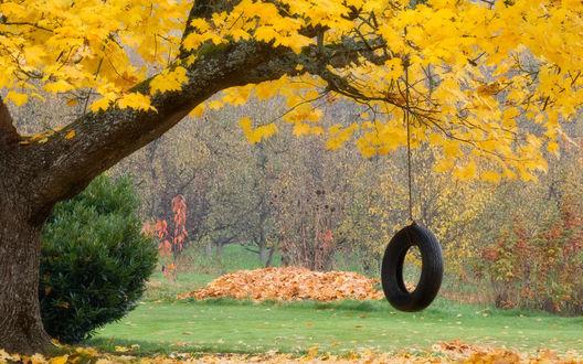 Обои На осеннем дереве, в лесу, висят качели в виде колеса