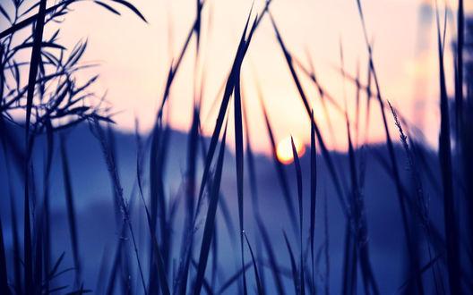 Обои Травинки на фоне заката