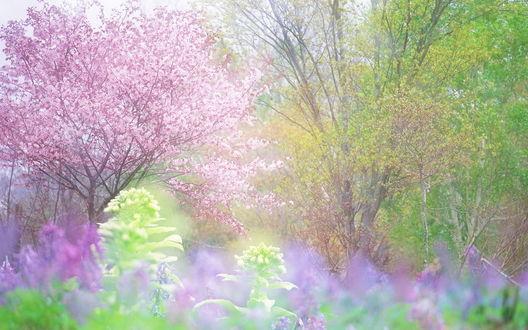 Обои Цветущий весенний сад с молодыми деревьями, листочками и кустами. Всё в нежных тонах