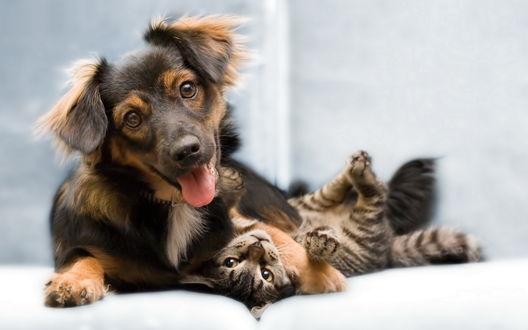 Обои Игривый щенок прижимает лапкой котёнка