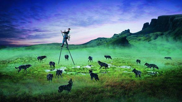 Обои Мужчина проходит поле на длинных палках чтобы его не скушали волки