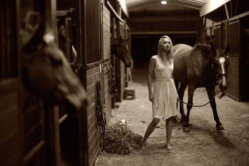 Обои Девушка в конюшне ведёт гнедого коня