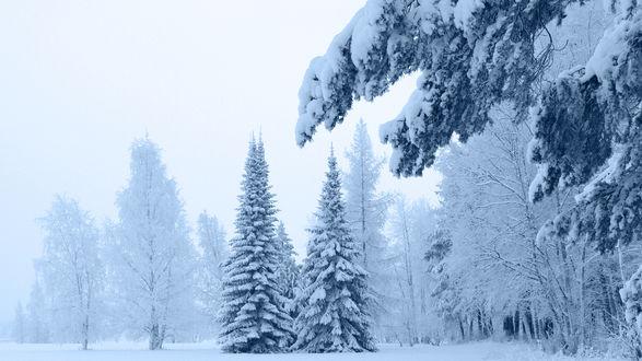 Обои Красивый заснеженный лес