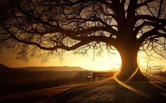 Обои Лавочка под большим деревом с видом на горы и закат