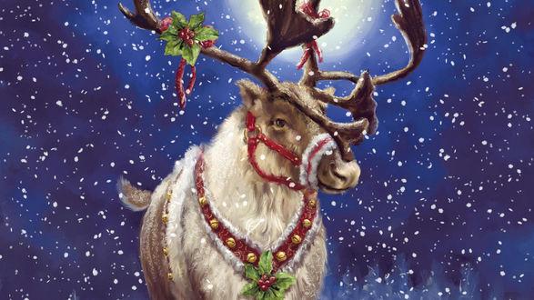 Обои Олень Санты Клауса / Santa Claus - Рудольф / Rudolf