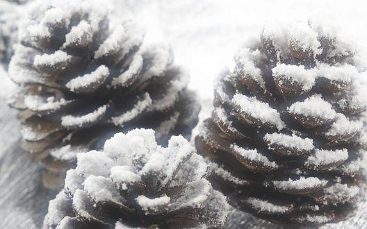 Обои Три сосновых шишки припорошены снегом