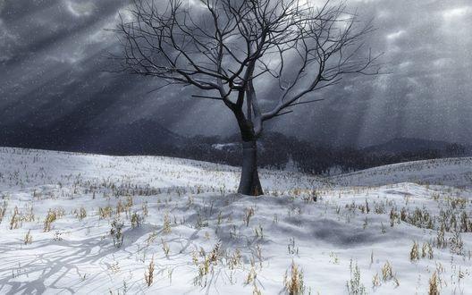 Обои Серое дерево без листьев на фоне заснеженного поля, пасмурного неба, под снегом