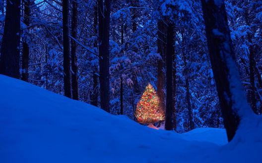 Обои Новогодняя елка в гирляндах , фонариках и игрушках стоит в зимнем, ночном лесу